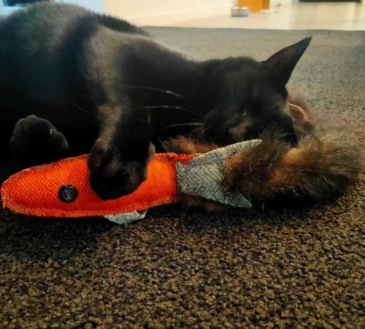 pet cat fish toy