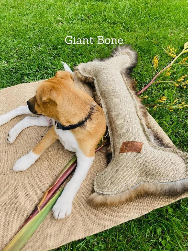 FunDiggityDog Giant Bone dog toy