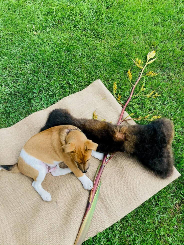 dog outside with giant dog bone