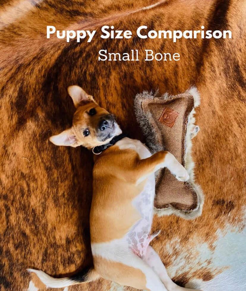 FunDiggityDog Small Bone Puppy comparison